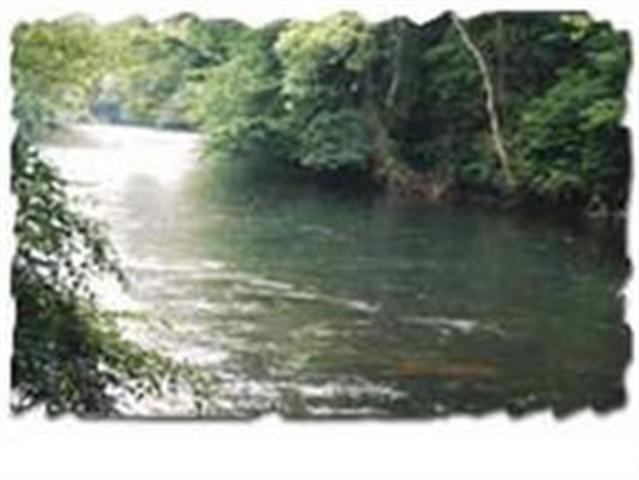 156 Tree Frog Lane, Lot #14, Benton, TN 37307 (#20130735) :: Billy Houston Group