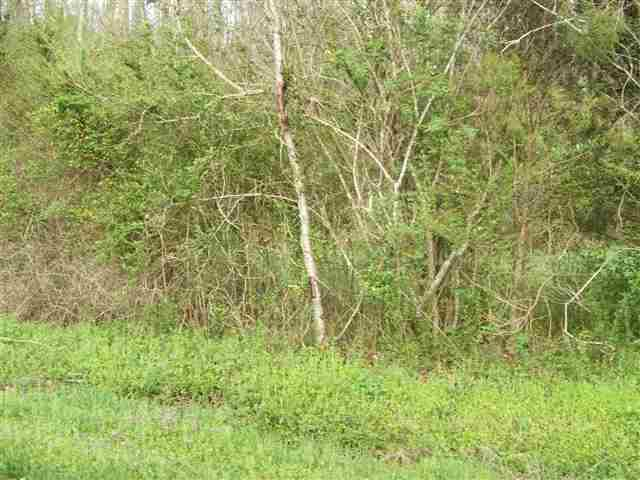 Lot #3 Smyrna Road, Evensville, TN 37332 (MLS #20132420) :: The Mark Hite Team