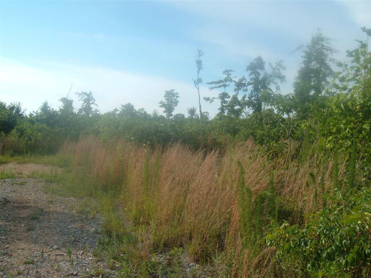 Reed - Photo 1