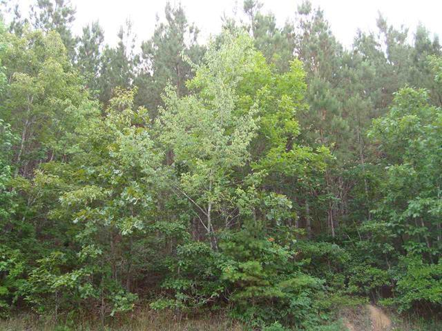 Lot 5 County Road 38, Riceville, TN 37370 (#20181515) :: Billy Houston Group