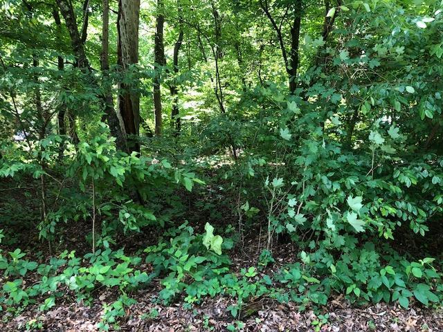 Lot 3 & 4 County Road 422, Athens, TN 37303 (#20183762) :: Billy Houston Group