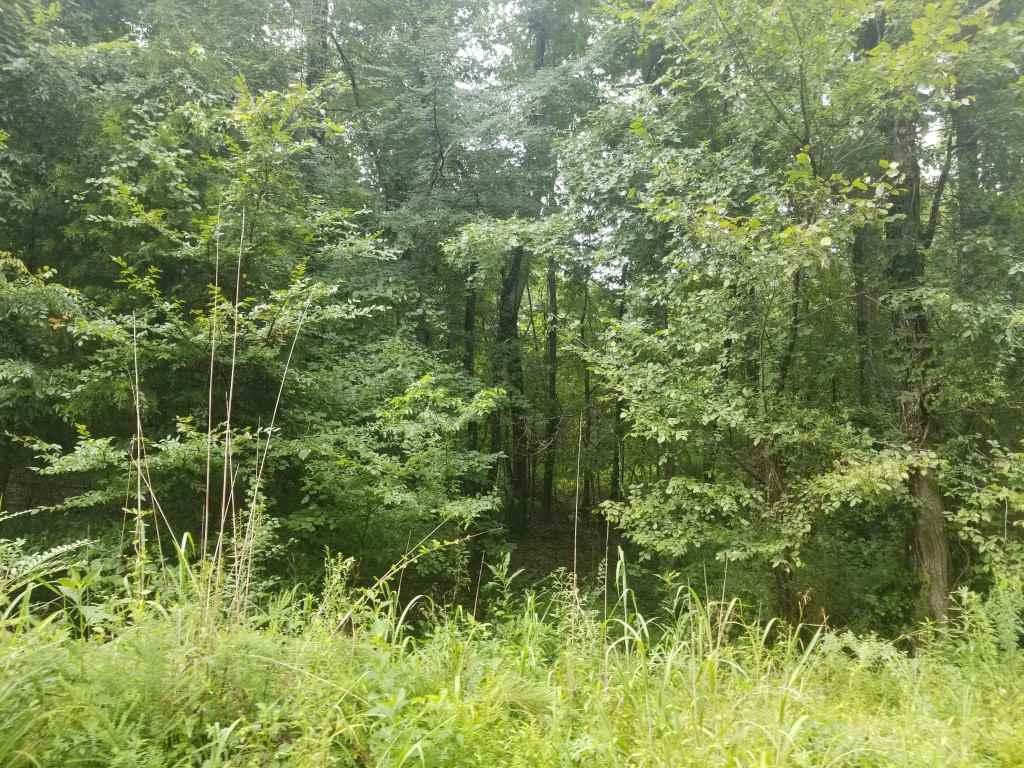 15.14 Acres Stump Hollow Road - Photo 1