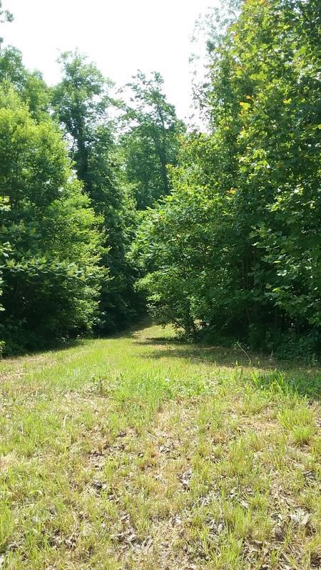 221 Ponders Gap Road, Ten Mile, TN 37880 (#20185467) :: Billy Houston Group