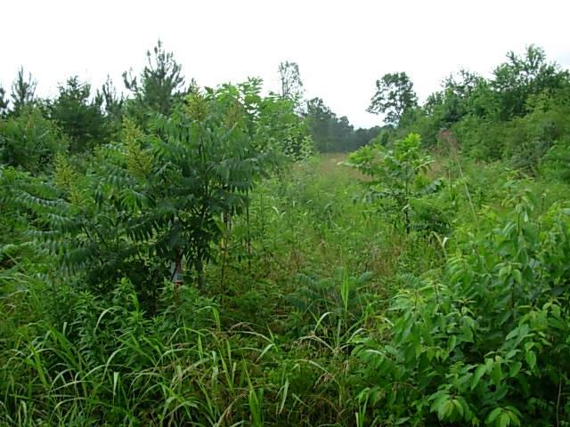 Lot 6 County Road 605, Athens, TN 37303 (MLS #20193288) :: The Mark Hite Team