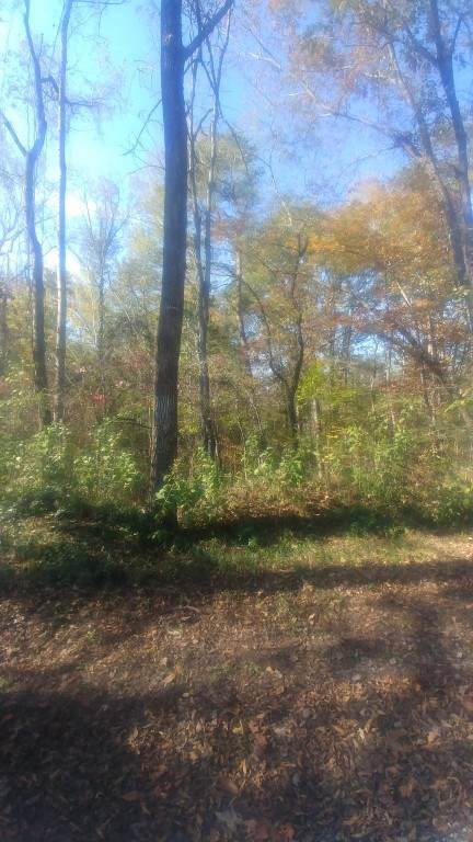 Lot #81 Cypress Drive, Spring City, TN 37381 (MLS #20196602) :: The Mark Hite Team