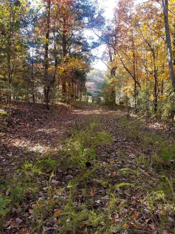 8.62 Acres Tammy Trail - Photo 1