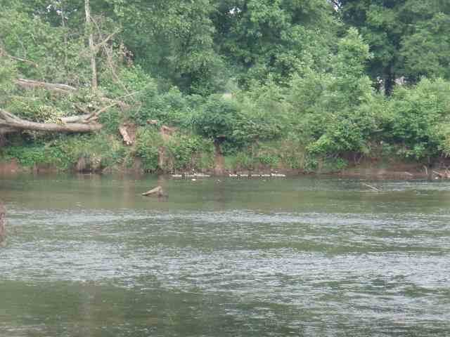 186 River Lane, Delano, TN 37325 (MLS #20200438) :: The Mark Hite Team