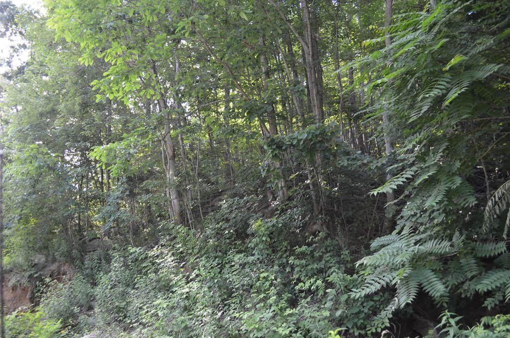TBD Overlook Trail/Dustin Ridge Road - Photo 1