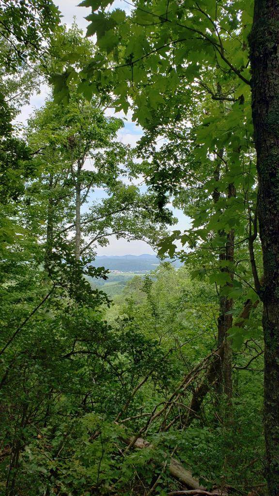Lot #2 Lake Heights Road, Tellico Plains, TN 37385 (#20214480) :: Billy Houston Group
