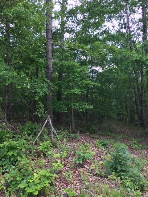 Lot 4 Bluff View Dr, Birchwood, TN 37308 (#20165025) :: Billy Houston Group