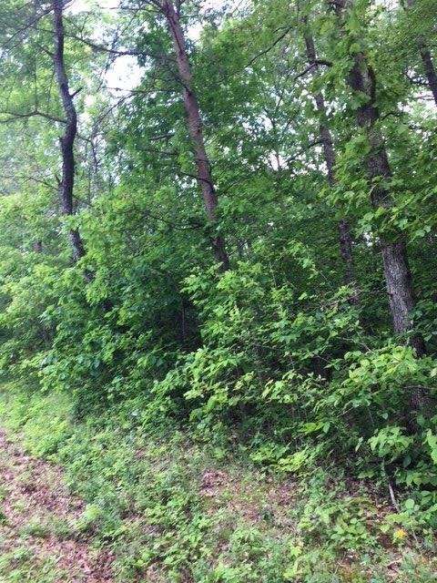Lots 1 & 2 Bluff View Dr, Birchwood, TN 37308 (#20165023) :: Billy Houston Group