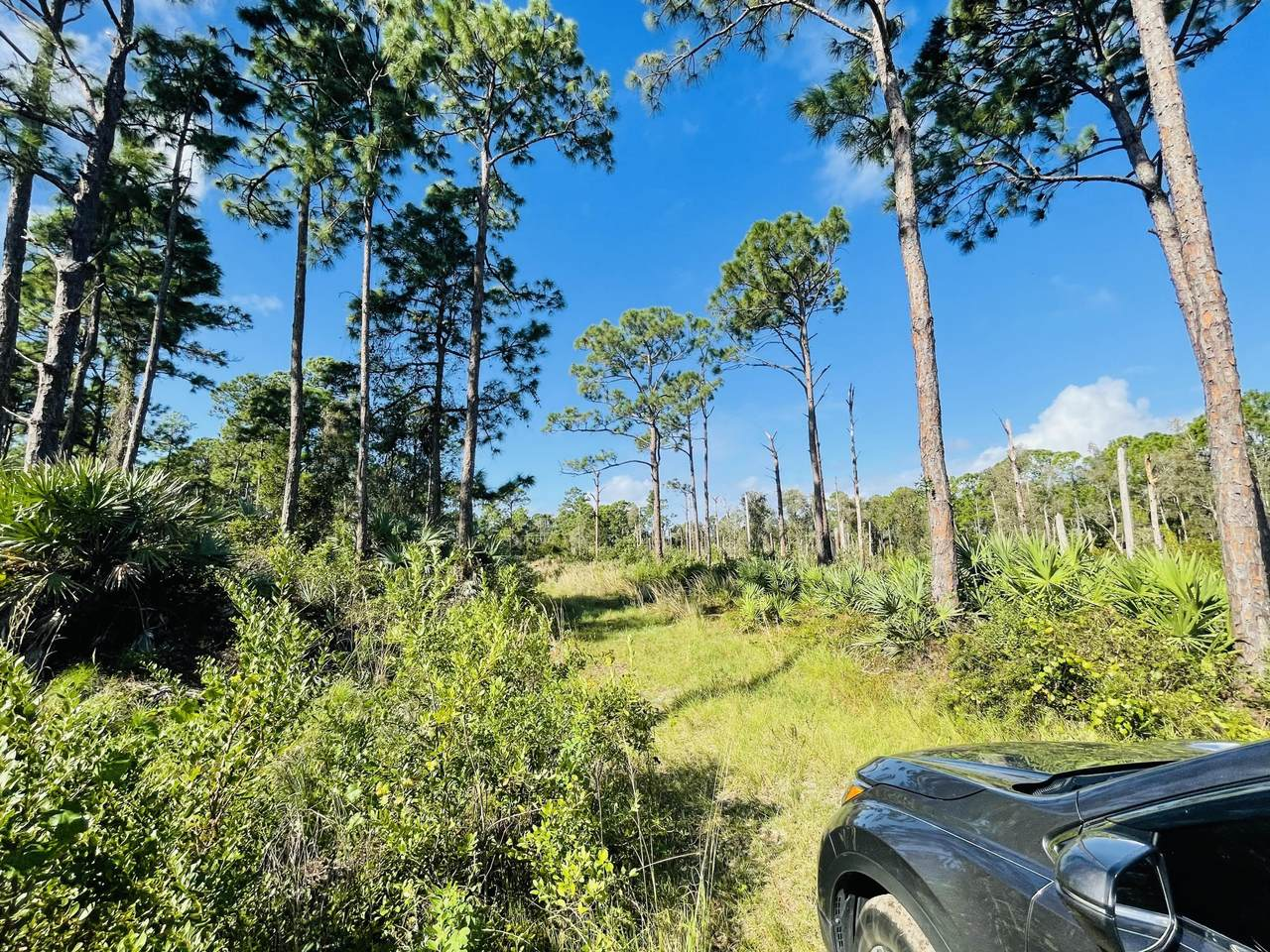 0 Treetop Trail Trail - Photo 1
