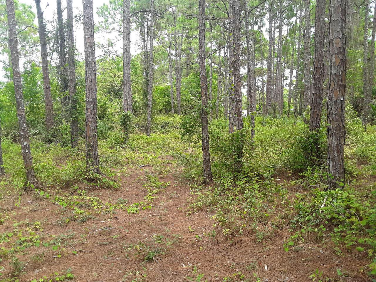 5200 Slash Pine Trail - Photo 1