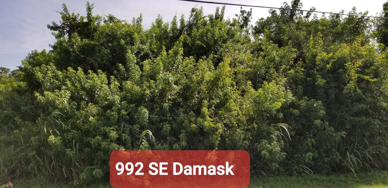 992 Damask Avenue - Photo 1