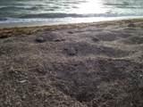0 Ocean Drive - Photo 6
