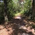 746 Hawks Ridge Way - Photo 35