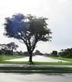 6490 Olivewood Circle - Photo 26