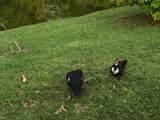 1756 Sawgrass Circle - Photo 17