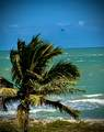 3200 Highway A1a - Photo 37