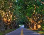 6285 Turn Leaf Trail - Photo 27