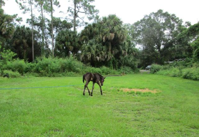 15590 North Road, Loxahatchee Groves, FL 33470 (#RX-10448548) :: Blue to Green Realty