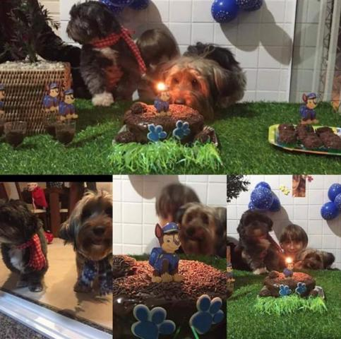 Dog Hotel Day Care And Groomer, Fort Lauderdale, FL 33316 (#RX-10468153) :: Ryan Jennings Group