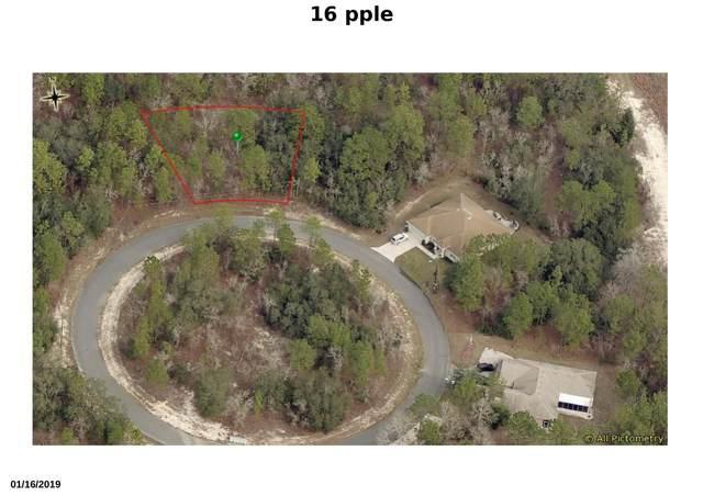 16 Apple Court, Homosassa, FL 34446 (#RX-10671266) :: Treasure Property Group