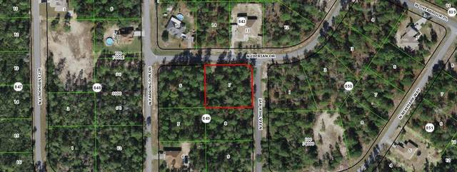 8590 N Feather Avenue, Citrus Springs, FL 34433 (MLS #RX-10714694) :: Castelli Real Estate Services