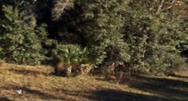 022-15062 NE 141st Place, Fort McCoy, FL 32134 (#RX-10343775) :: Ryan Jennings Group