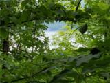 8436 Reservoir Hill Road - Photo 1