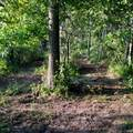 Lot 3 Selter Road - Photo 18