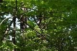 22651 Dobbins Road - Photo 6