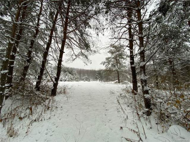 Lot C Rohr Hill Road, East Otto, NY 14729 (MLS #B1241414) :: MyTown Realty