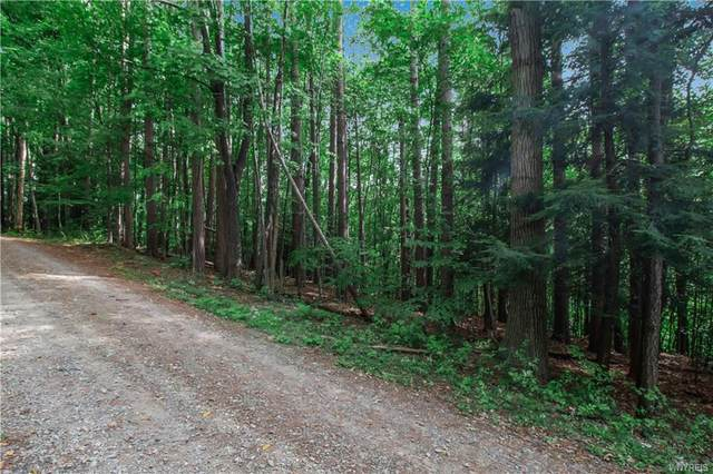 00 Stone Chimney Road, Little Valley, NY 14779 (MLS #B1369049) :: Robert PiazzaPalotto Sold Team