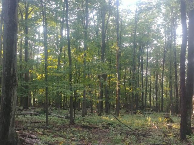 0 Oil Well Hollow Road S, Cohocton, NY 14826 (MLS #R1191276) :: Updegraff Group