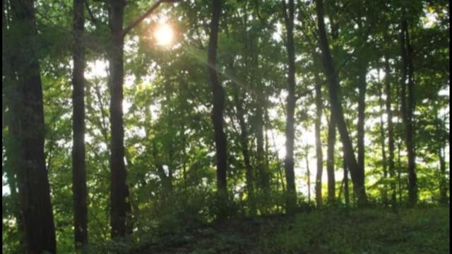 4963 Mount Pleasant Road, Moravia, NY 13118 (MLS #R1323087) :: BridgeView Real Estate