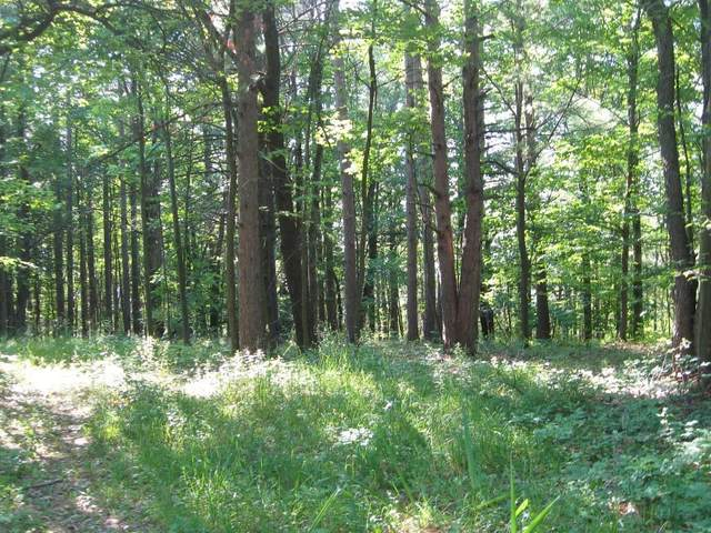 0 Crow's Nest Road, Urbana, NY 14840 (MLS #R1348231) :: Robert PiazzaPalotto Sold Team