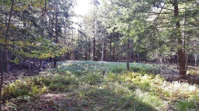 Off Kehoe Road, Sandy Creek, NY 13145 (MLS #S1081475) :: The Chip Hodgkins Team
