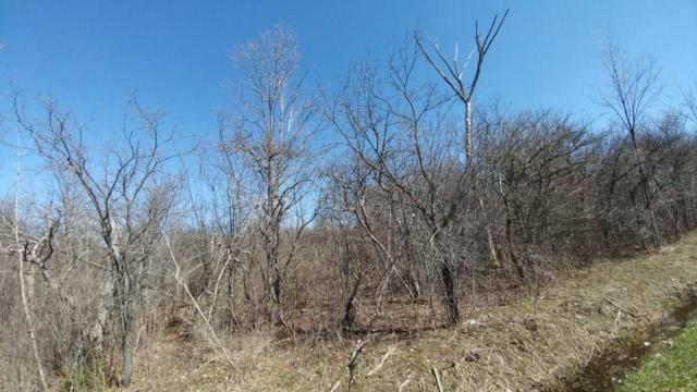 lot 1 part of 526 Bird Cemetery Road, Locke, NY 13092 (MLS #R1038386) :: The Chip Hodgkins Team