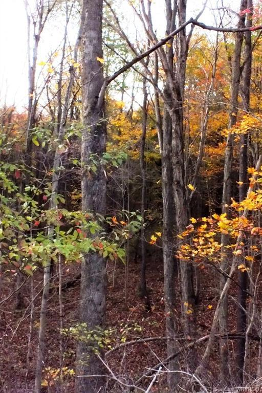 0 Morgan Hollow /Bryant Hil, Franklinville, NY 14737 (MLS #B1082057) :: The Rich McCarron Team
