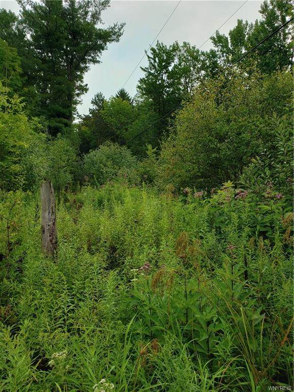 0 V/L Monk Hill Road, East Otto, NY 14729 (MLS #B1271990) :: 716 Realty Group