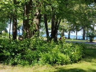 6 Beach Place, Portland, NY 14063 (MLS #R1128022) :: Lore Real Estate Services