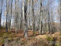 2320 Wilson 1.18 Acres Drive, Marcellus, NY 13108 (MLS #S1086681) :: The Chip Hodgkins Team