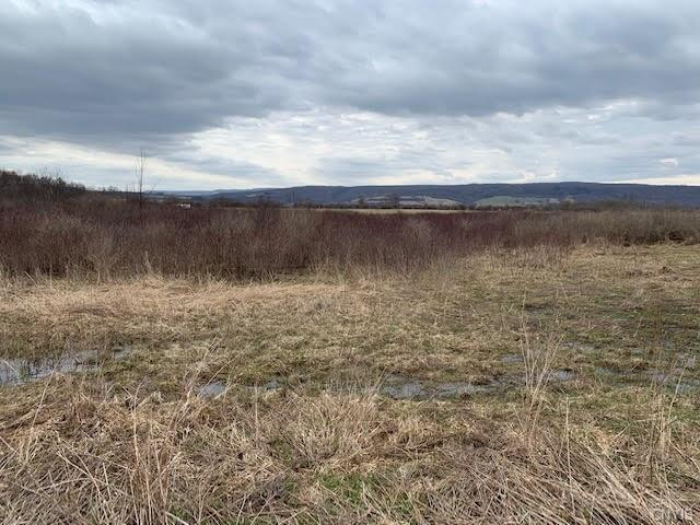 00 Gun Club Road, Little Falls-Town, NY 13365 (MLS #S1186612) :: Robert PiazzaPalotto Sold Team