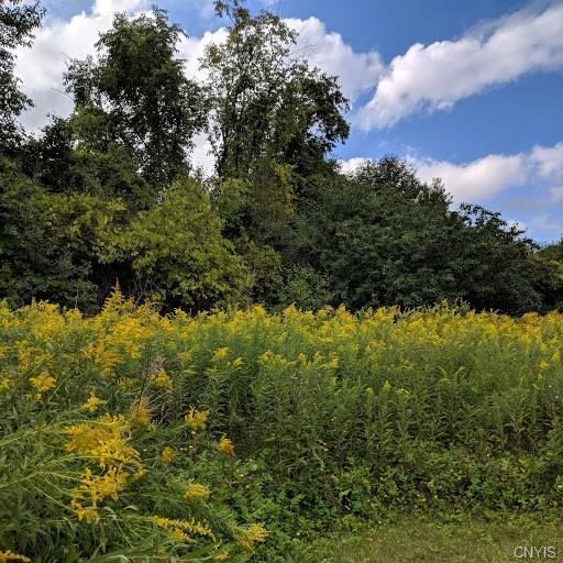 Lot D1 North Road, Owasco, NY 13021 (MLS #S1194226) :: The Glenn Advantage Team at Howard Hanna Real Estate Services