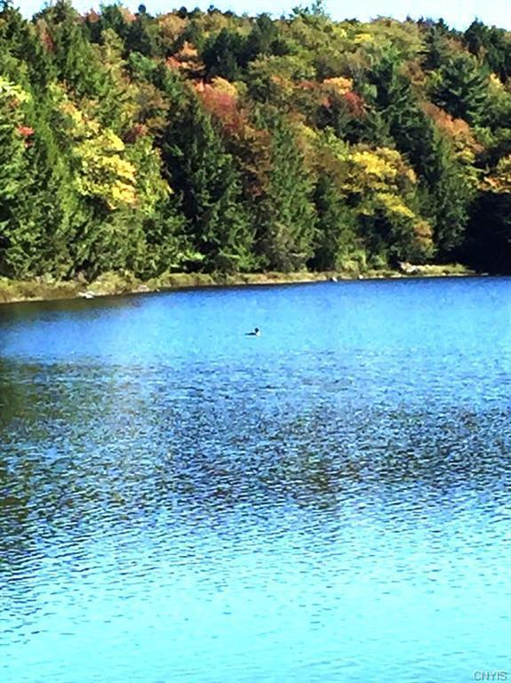 487 Woodworth Lake Trail, Bleecker, NY 12078 (MLS #S1208952) :: MyTown Realty