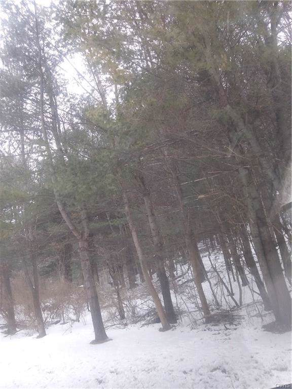 0 Route 20, Eaton, NY 13334 (MLS #S1248292) :: Robert PiazzaPalotto Sold Team