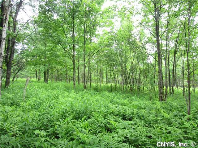 Lot 15 Chapman Road, Georgetown, NY 13072 (MLS #S314070) :: The Chip Hodgkins Team