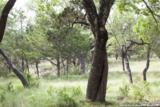 27311 Ranch Creek - Photo 1