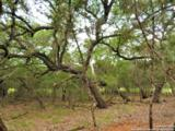 LOT 69 Tracie Trail - Photo 9
